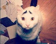 6 Ways Life Imitates Japanese Writing (As Shown By Cats)