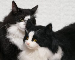 Japan's Realistic Fake Cats