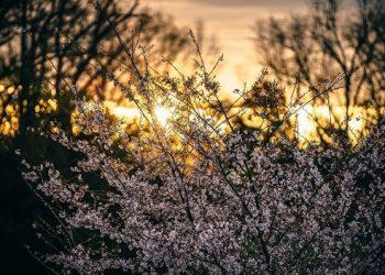 Achieving Your Japanese Goals – April 2019